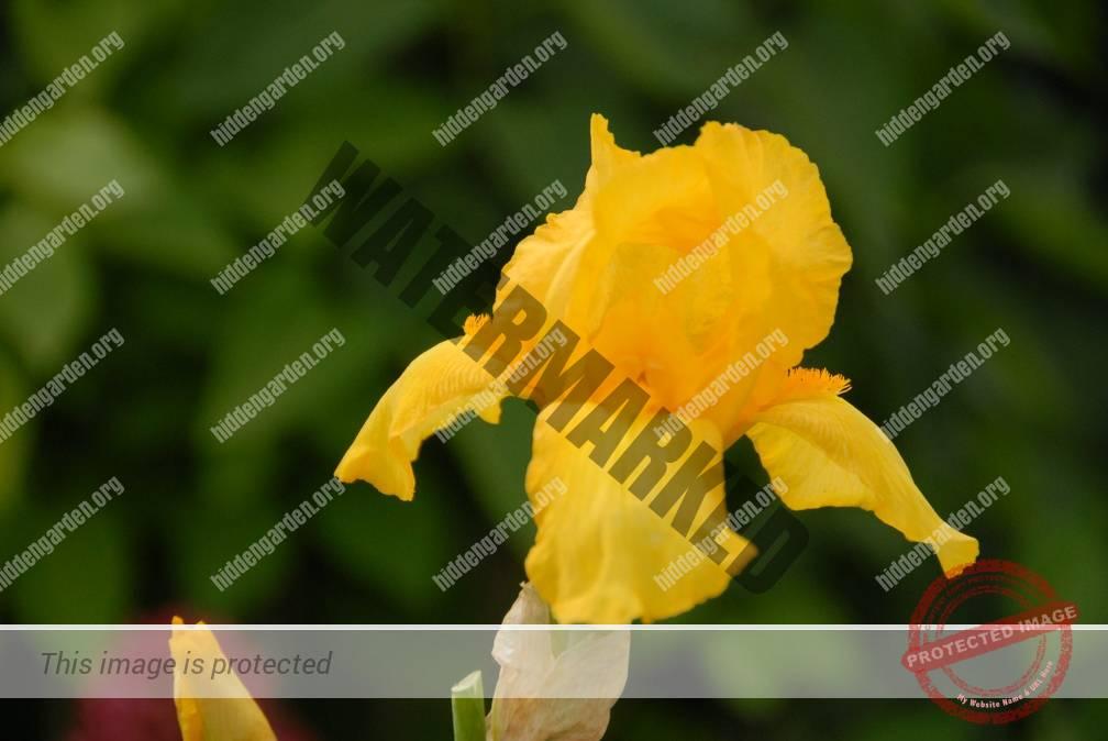 2668_DSC_0076_1008x674