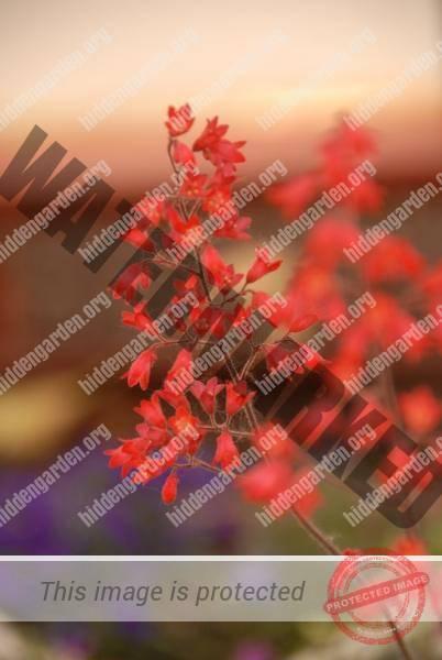 1446_DSC_0801_506x756