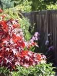Simister Garden 06_web.jpg