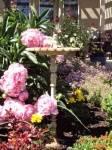 Simister Garden 17_web.jpg