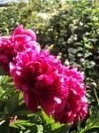 Simister Garden 21_web.jpg