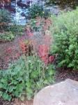 Smith Garden 04_web.jpg